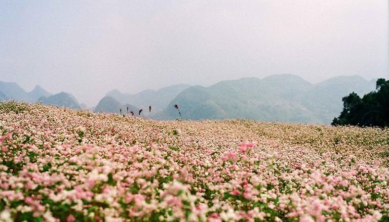 Mùa hoa đẹp ở Đà Lạt