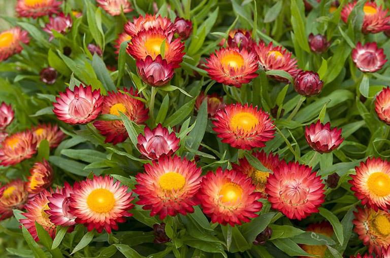 Vườn hoa Đà Lạt đẹp