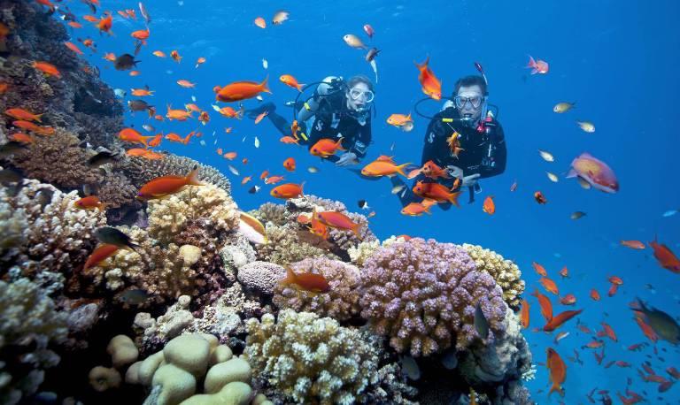 Kinh nghiệm lặn biển ngắm san hô Côn Đảo