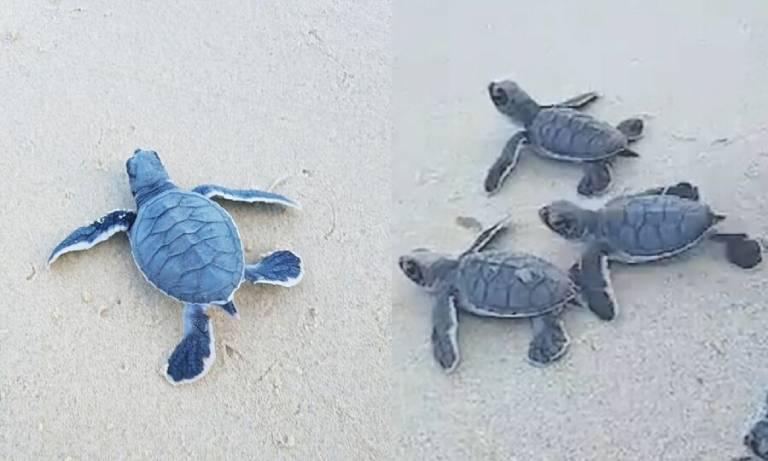 Kinh nghiệm xem rùa đẻ trứng tại Côn Đảo